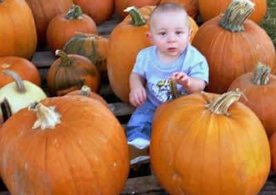 Pumpkin Patch Pictures pumpkin Pictures