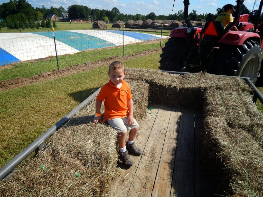 pumpkin patch angie louisiana corn maze fall pumpkins steele christmas tree farm - Christmas Tree Farm Louisiana