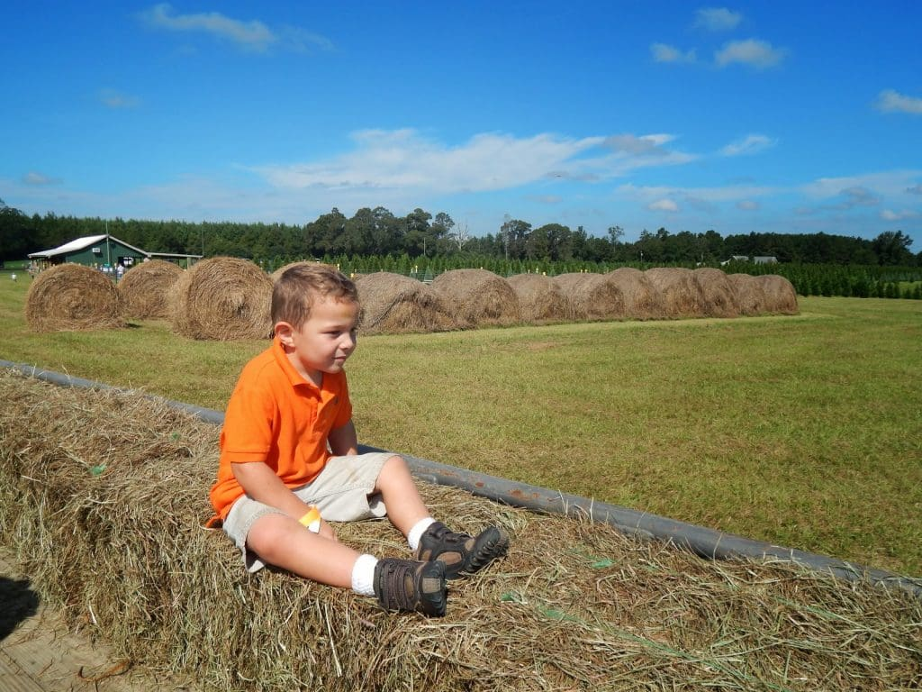 Family Fall Fun At Steele's Pumpkin Patch And Corn Maze