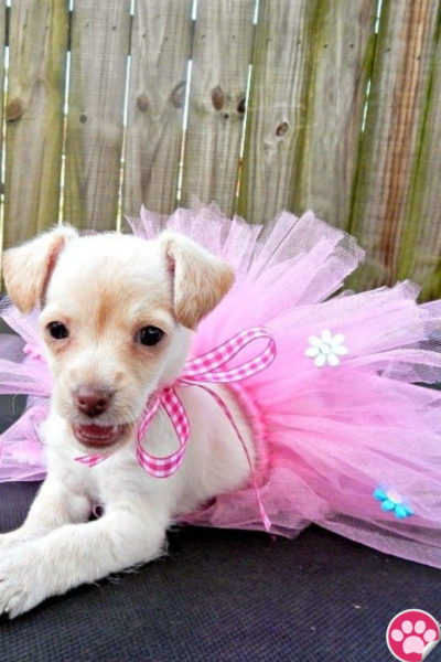 DIY DOGGIE TUTU