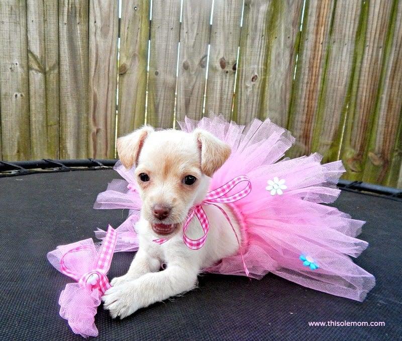 DIY Doggie Tutu Tutorial with Bow