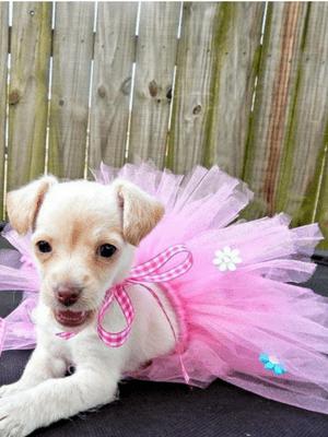DIY: Doggie Tutu Tutorial