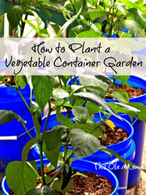 How to Plant a Vegetable Container Garden
