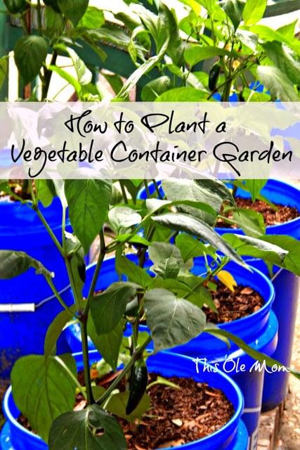 Container Garden, Vegetable Garden, Plant a Garden, Vegetable Container Garden , Planting a Garden, How to plant a Garden