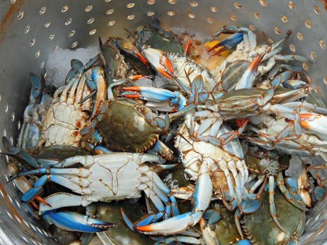 How To Cook Live Crab >> Louisiana Crab Boil Recipe - This Ole Mom