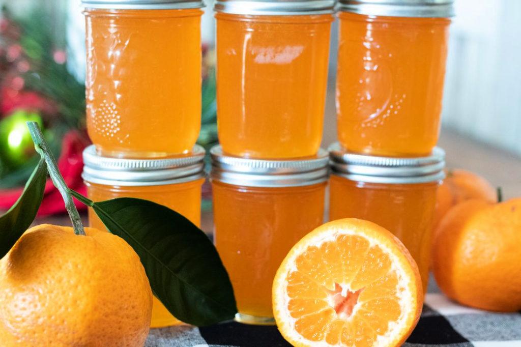 Satsuma Jelly in half pint jars.